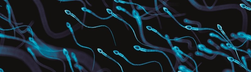 Sperm biology and male reproductive health