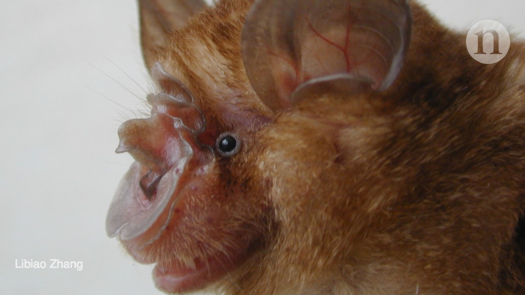 Bat cave solves mystery of deadly SARS virus — and suggests new outbreak could occur