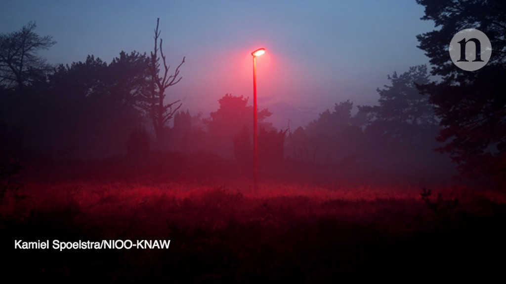 The Dark Side Of Light How Artificial Lighting Is Harming Natural World