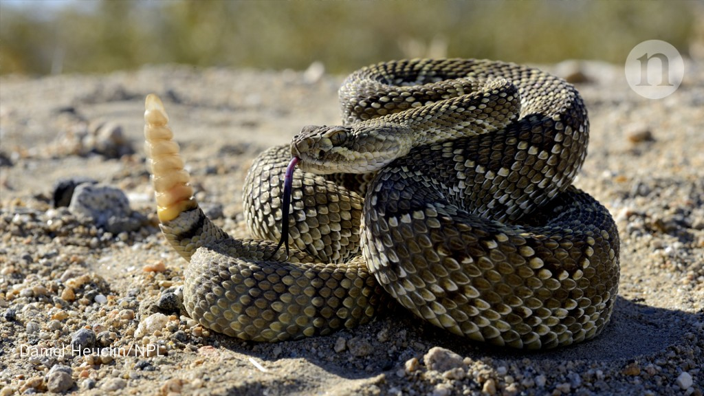 Rattlesnake Gardeners Sow Plant Diversity Research Highlights,Types Of Cacti With Pictures