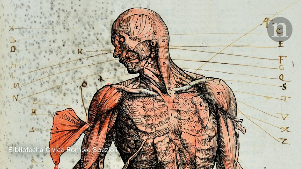 Sex Religion And A Towering Treatise On Anatomy