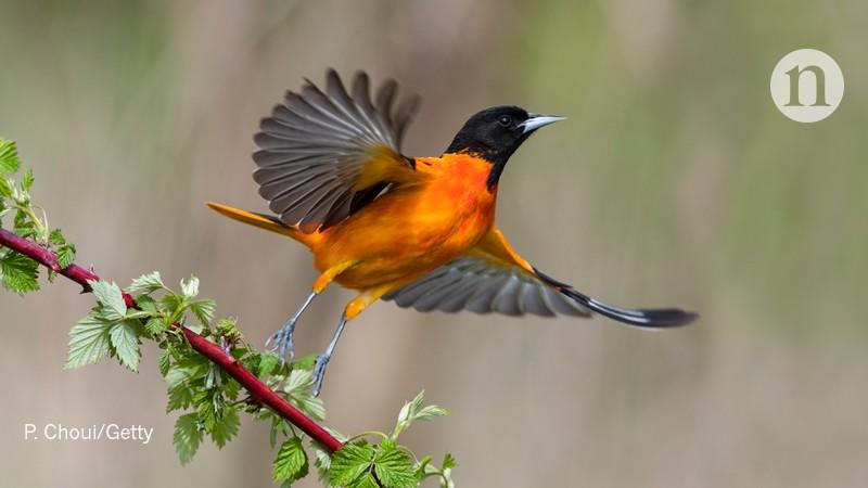 Bird forecasting by radar