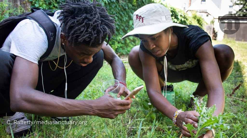 No PhDs Needed: How Citizen Science Is Transforming Research