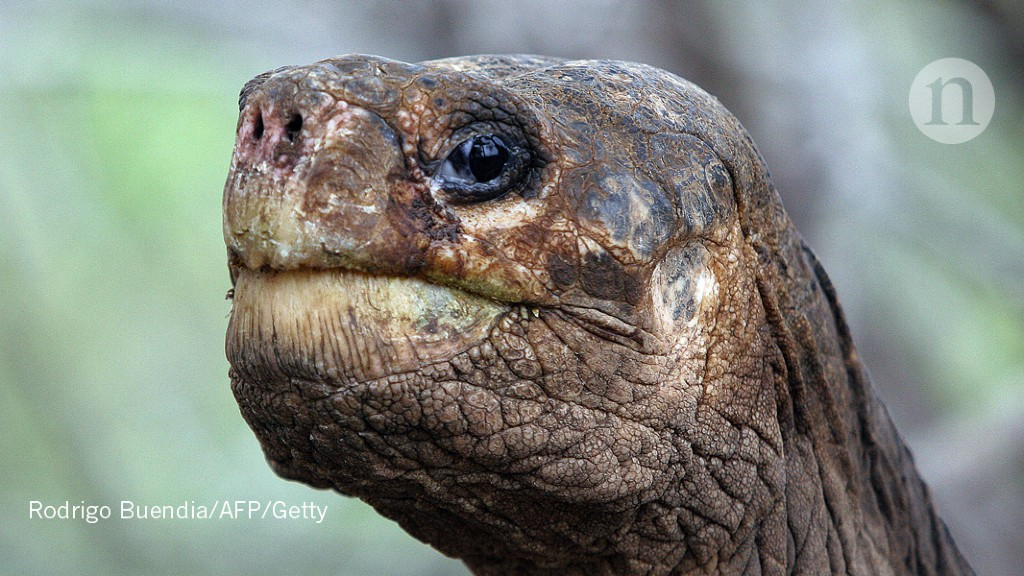 The secrets of Lonesome George