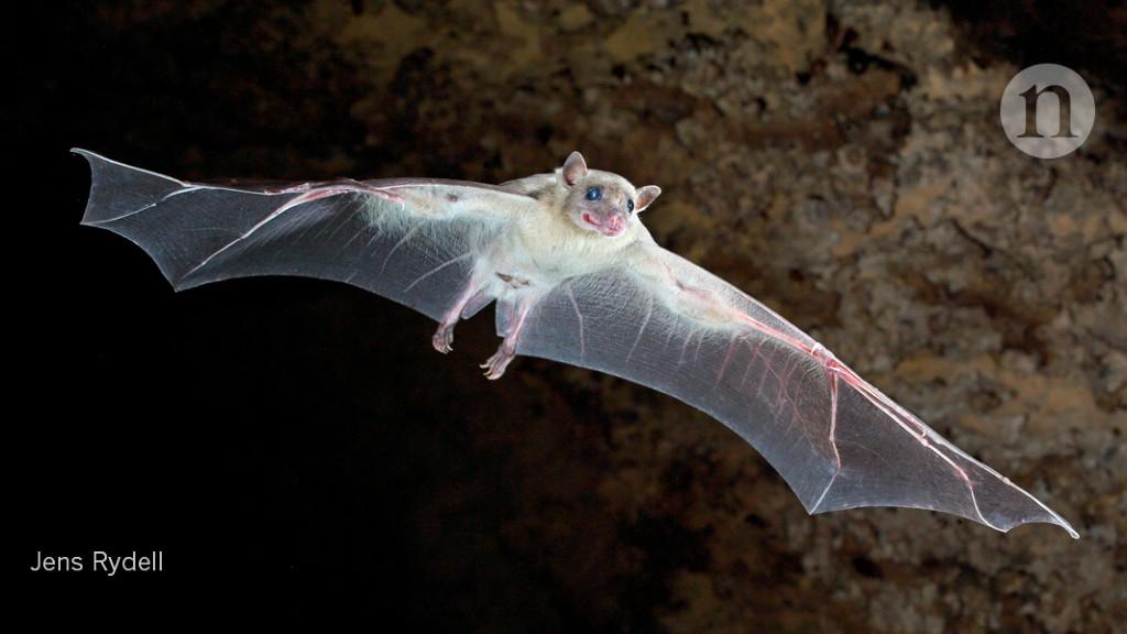 How Snuggling Close Affects Bats