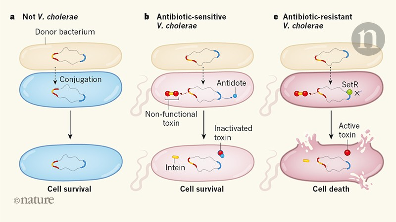 Selective killing of antibiotic-resistant bacteria from within