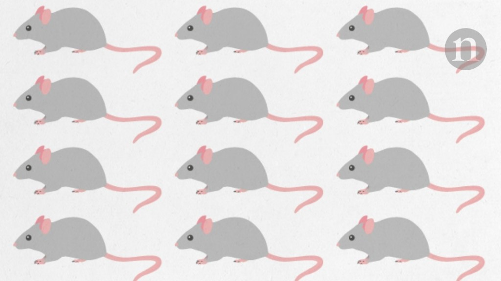 Proposal to close UK mouse-research centre is 'major threat'