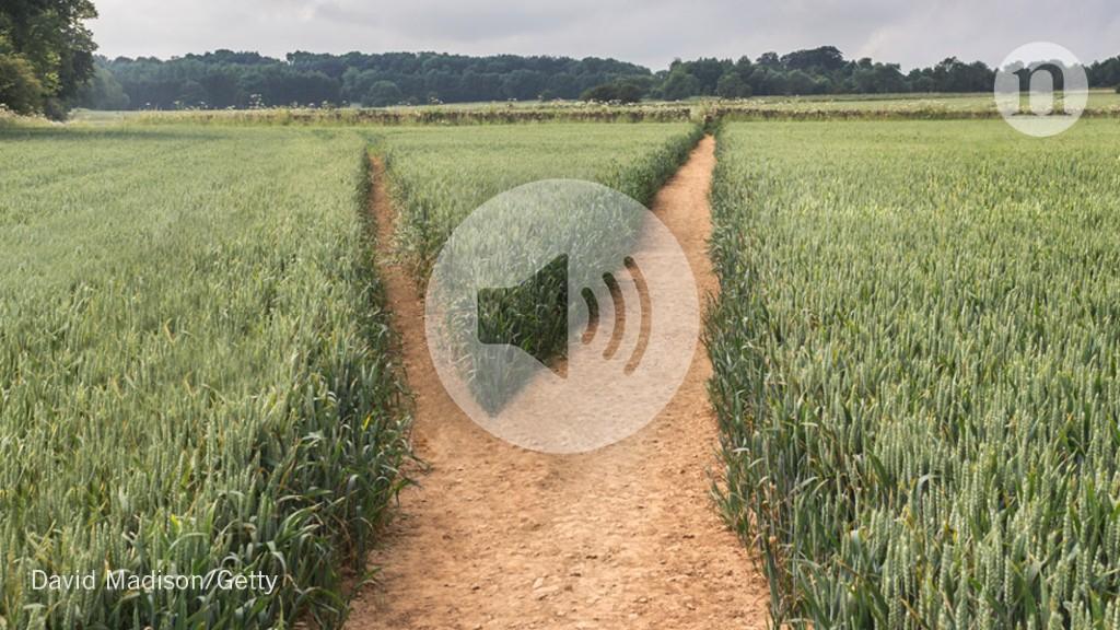 Working Scientist podcast: Switching scientific disciplines