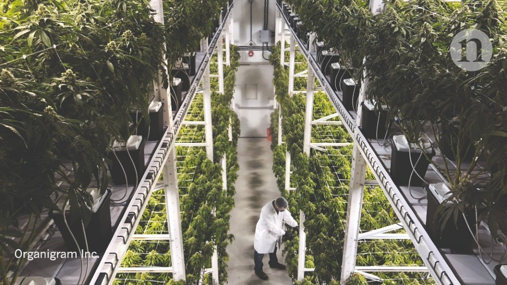 The professionalization of cannabis growing