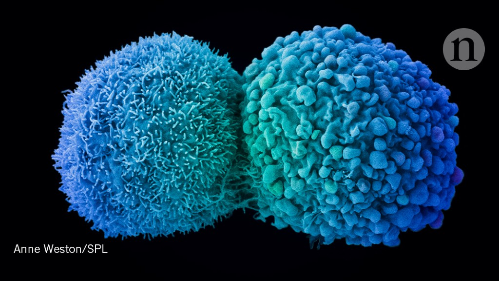 Many cancer drugs aim at the wrong molecular targets