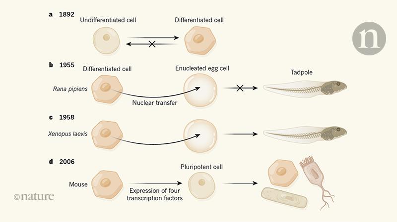 Cell identity reprogrammed