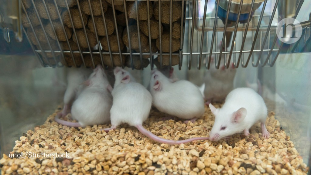 India pushes for alternatives to animals in biomedical research