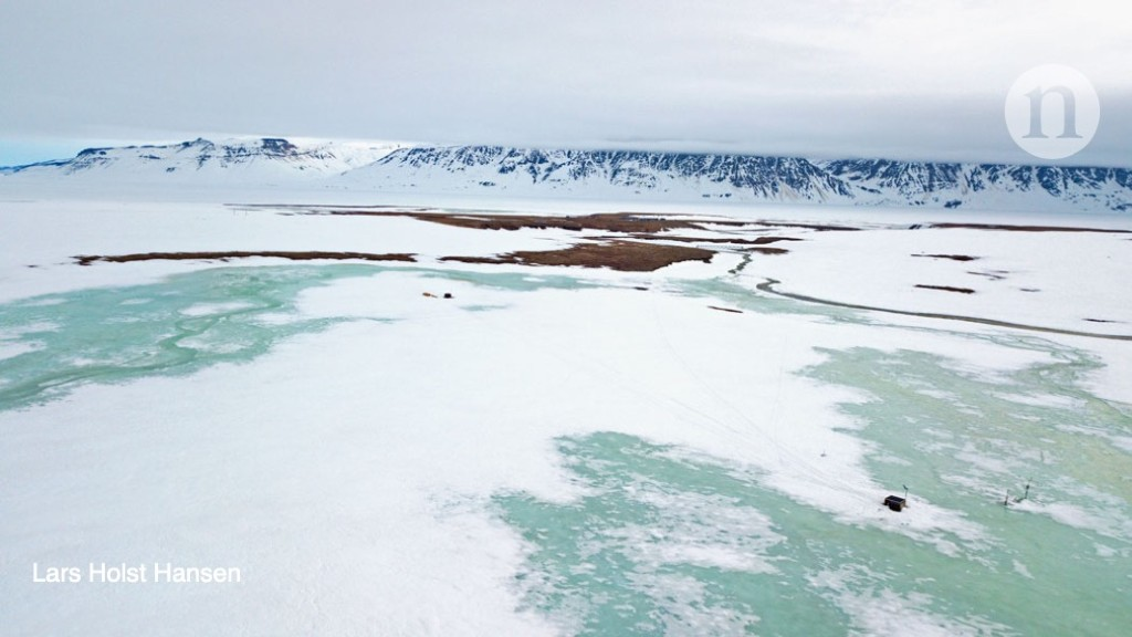 Extreme winter leads to an Arctic reproductive collapse