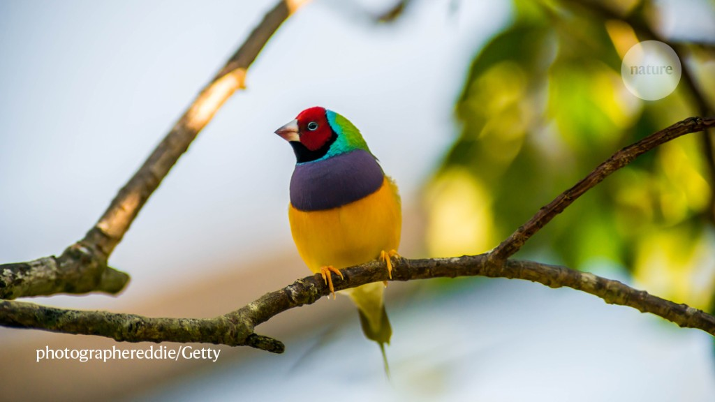 Rare bird's detection highlights promise of 'environmental DNA'