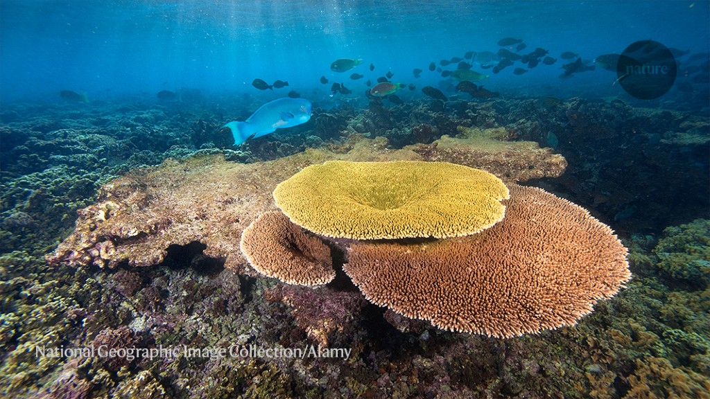 These corals could survive climate change — and help save the world's reefs