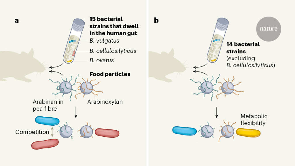 Food for thought about manipulating gut bacteria