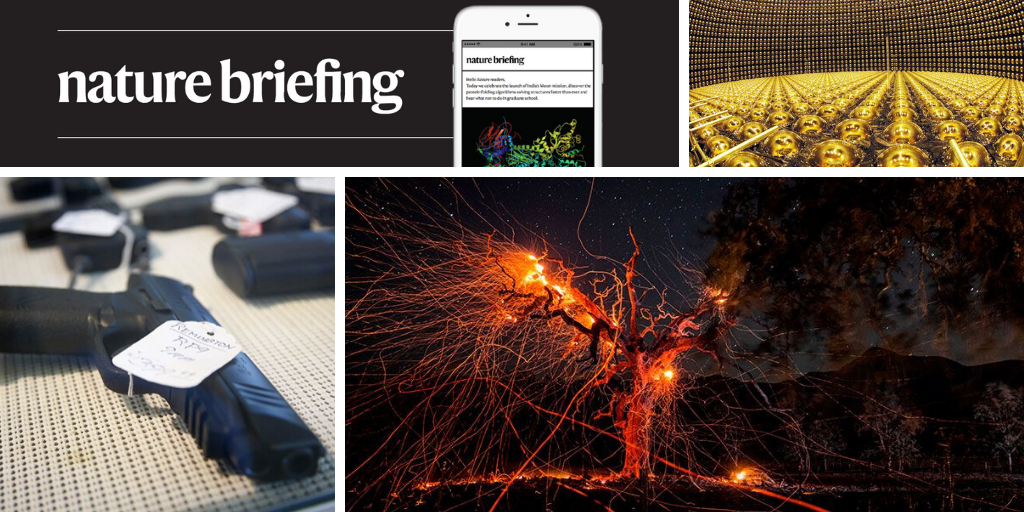 Daily briefing: The best science images of the year - Nature.com