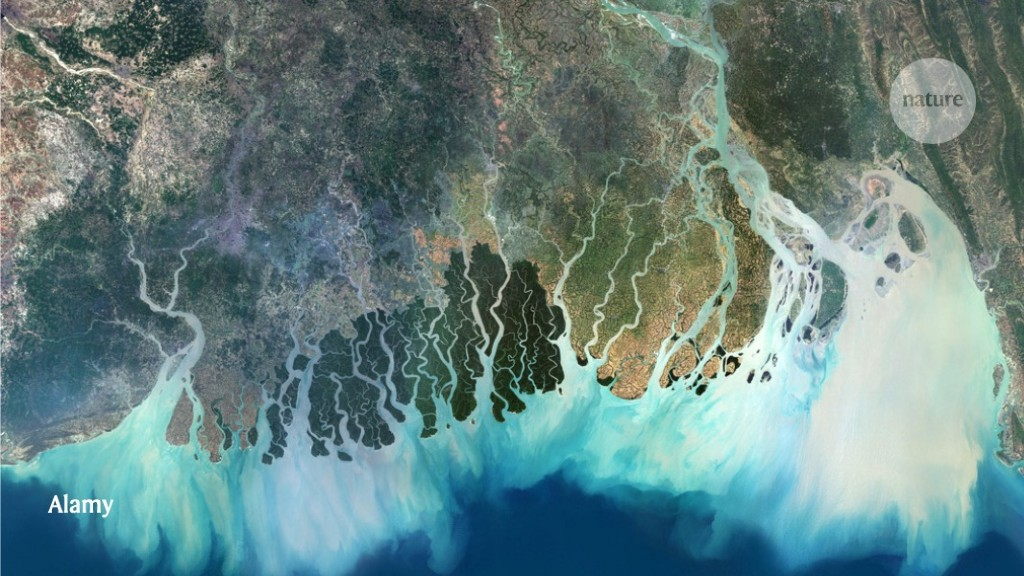 Human activities have changed the shapes of river deltas