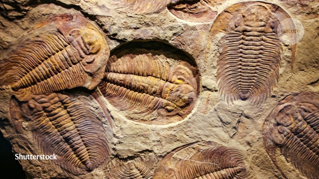 Supercomputer scours fossil record for Earth's hidden extinctions