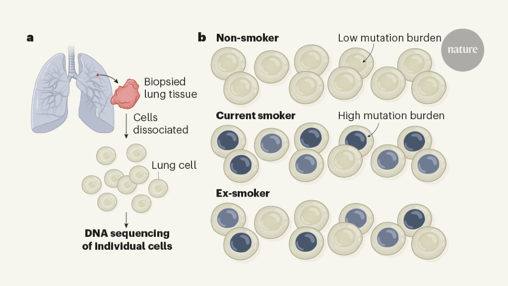 Smoke signals in the DNA of normal lung cells