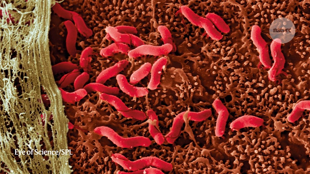 Fighting cancer with microbes