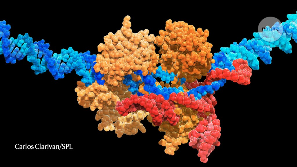 Super-precise CRISPR tool enhanced by enzyme engineering