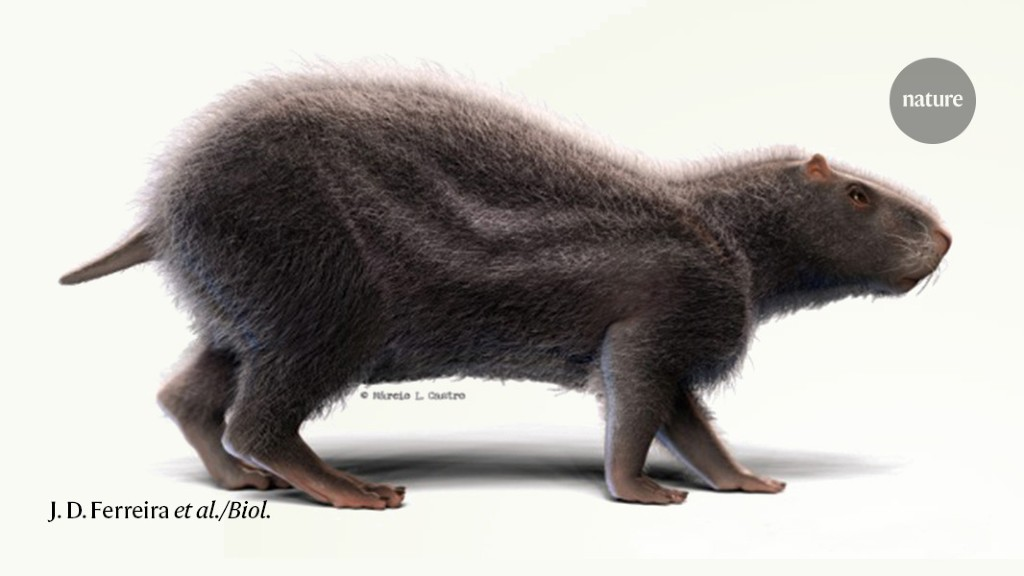 Weight loss diet Giant extinct rodent was all brawn and little brain thumbnail