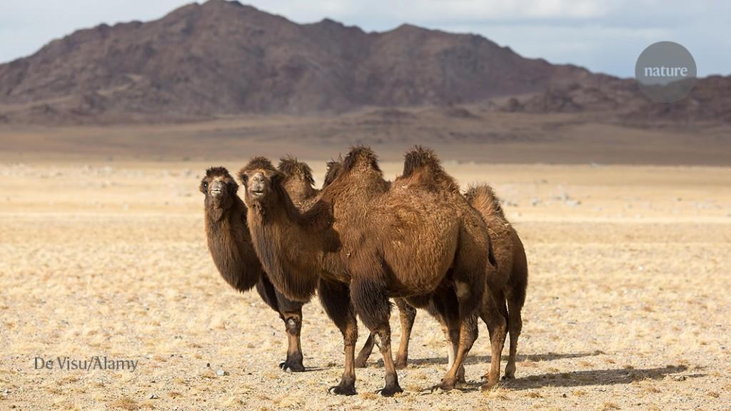 Dodging bandits, eking out food: tracking wildlife in Mongolia