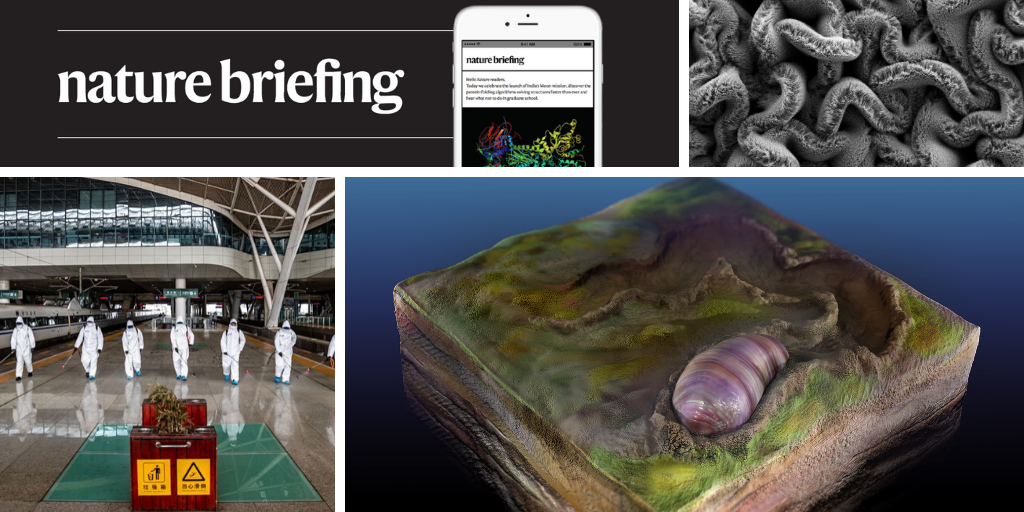Daily briefing: Tiny fossil has the oldest known rear-end