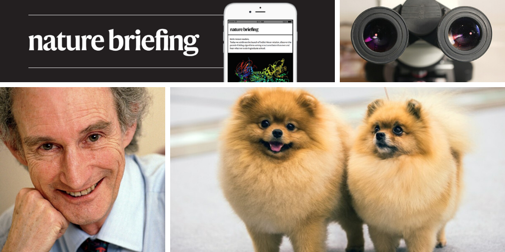 Daily briefing: The first two dogs with coronavirus probably caught it from their owners