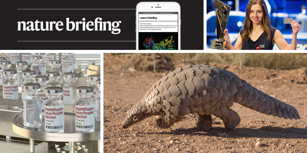 Daily briefing: Pangolins return to a region where they were once extinct