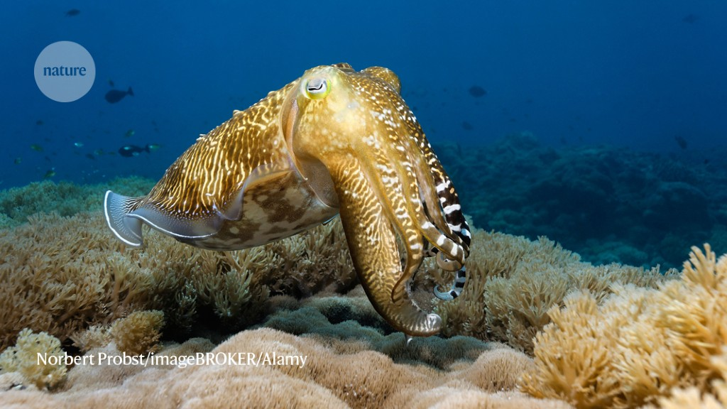 Arms control: cuttlefish can pass the 'marshmallow test' - Nature.com