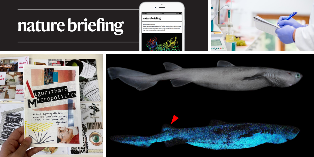 Daily briefing: Glow-in-the-dark shark is biggest bioluminescent vertebrate
