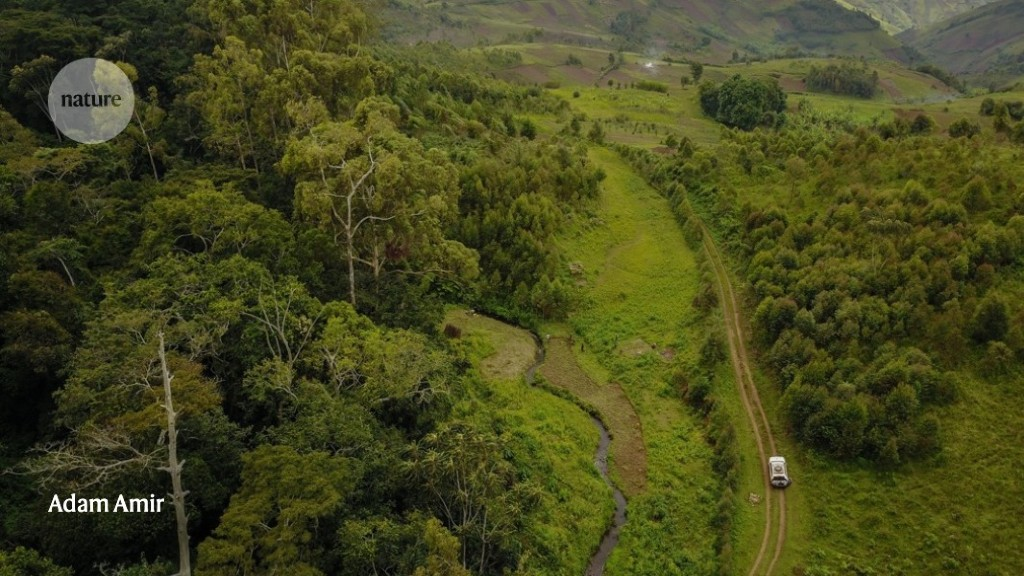 African forest maps reveal areas vulnerable to the effects of climate change - Nature.com