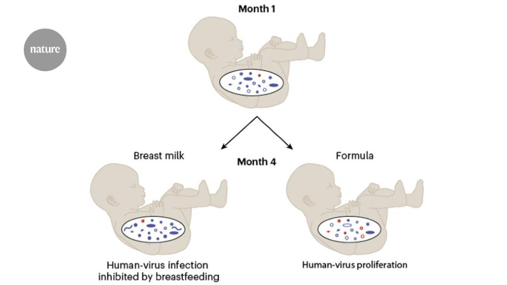 humavirus natural cure)