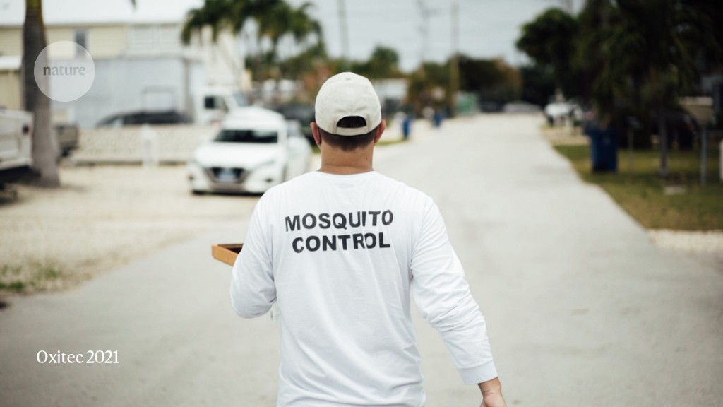 First genetically modified mosquitoes released in the United States
