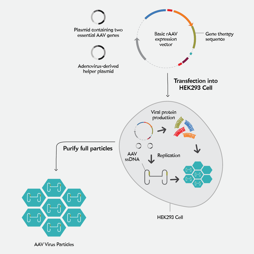 Three Is The Magic Number In Gene Therapy Production