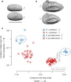 High male sexual investment as a driver of extinction in fossil ostracods