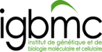Institute of Genetics and Molecular and Cellular Biology (IGBMC)