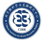 The Chinese Institute for Brain Research (CIBR)