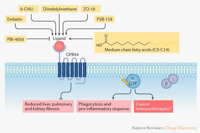 GPR84: an immune response dial?