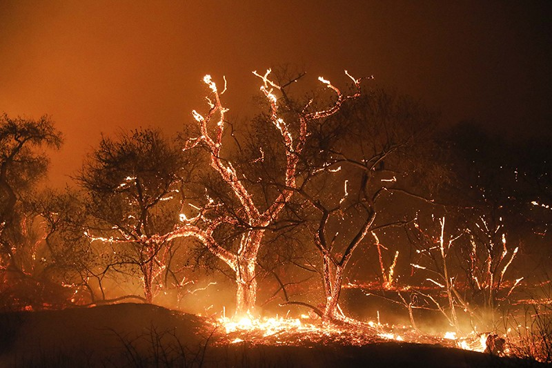 Trees and brush on fire