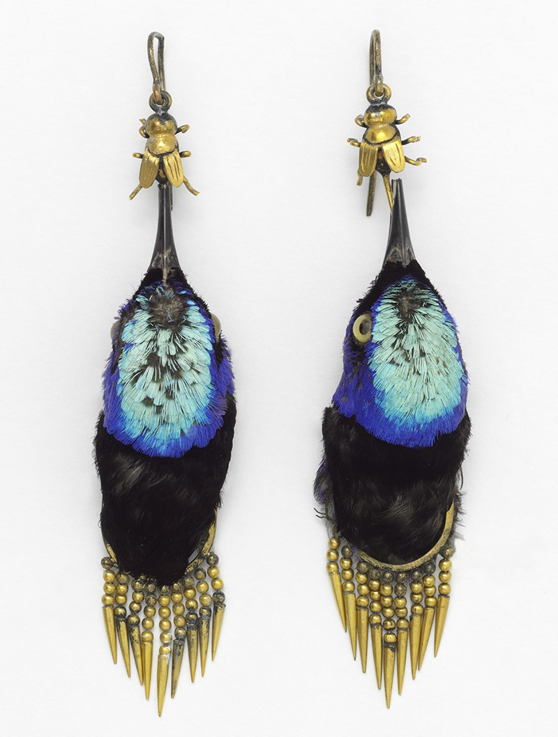 Earrings made from bird heads, 1875.