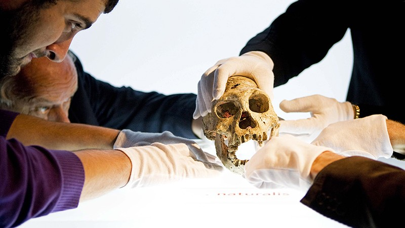 Skull D2700 discovered in 2001 at Dmanisi in Georgia is held by museum staff as they prepare it for an exhibition in Netherlands