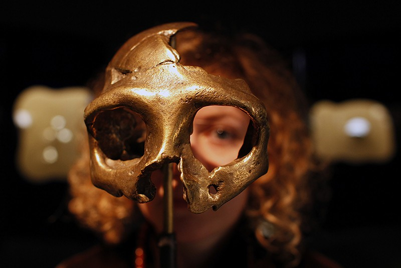 A girl looks through the replica of a Neanderthal skull in a museum.