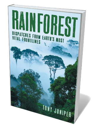 Book jacket for Rainforest