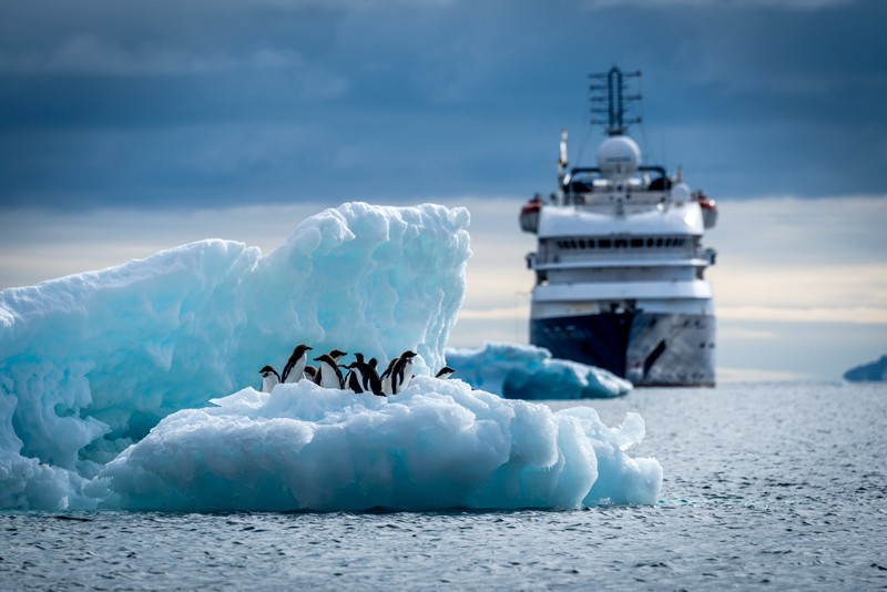 Adelie penguins on an iceberg with liner behind