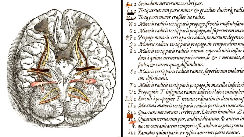 Left - Brain illustration with pink, yellow, brown and grey areas painted in. Right: Colour coded corresponding list.