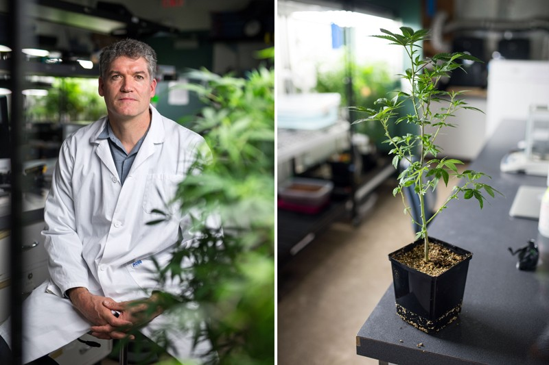 Jonathan Page and cannabis plant
