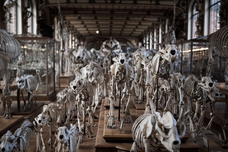 Animal skeletons on display